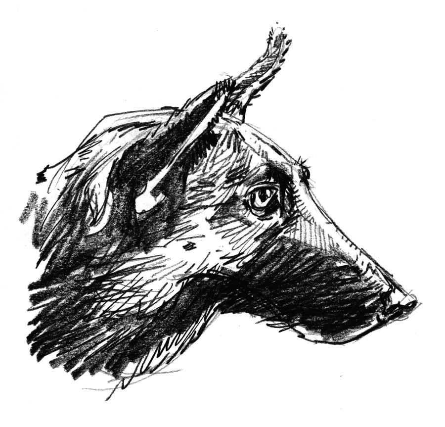 florianscheuererhund